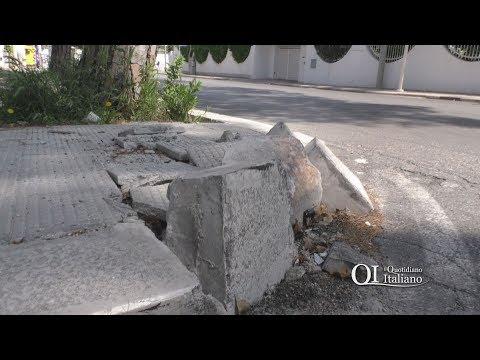 Bari, marciapiede rotto e pino ingombrante in via Caduti Strage di Bologna