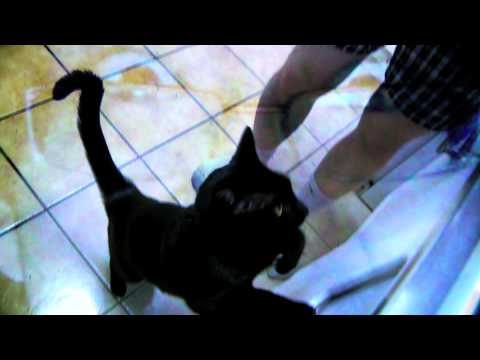 Cats Gone Wild! The Best Cat Video on YouTube! Feat. C-Pain