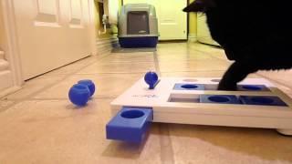 Cat Problem Solving