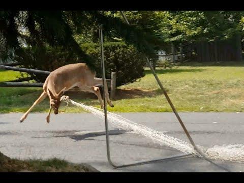 deer vs. soccer net