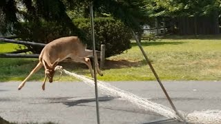 deer vs. soccer net