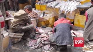 Two Million Children At Work In Afghanistan / دو میلیون کودک در افغانستان کار میکنند