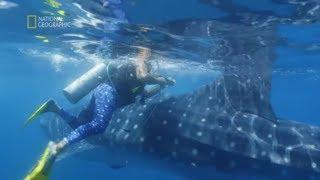To było spotkanie z największymi rybami świata! [Sprawa dla explorera]