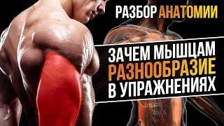 Разбор Анатомии: Функции мышц и Упражнения (Биомеханика мышц)