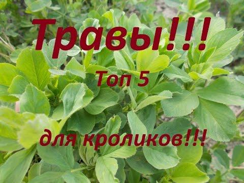 Какие травы любят кролики??? Мой, рейтинг (ТОП5),луговых трав для кроликов!!!
