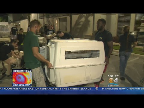 Shelter Animals Flown To Safety Away From Hurricane Irma's Path