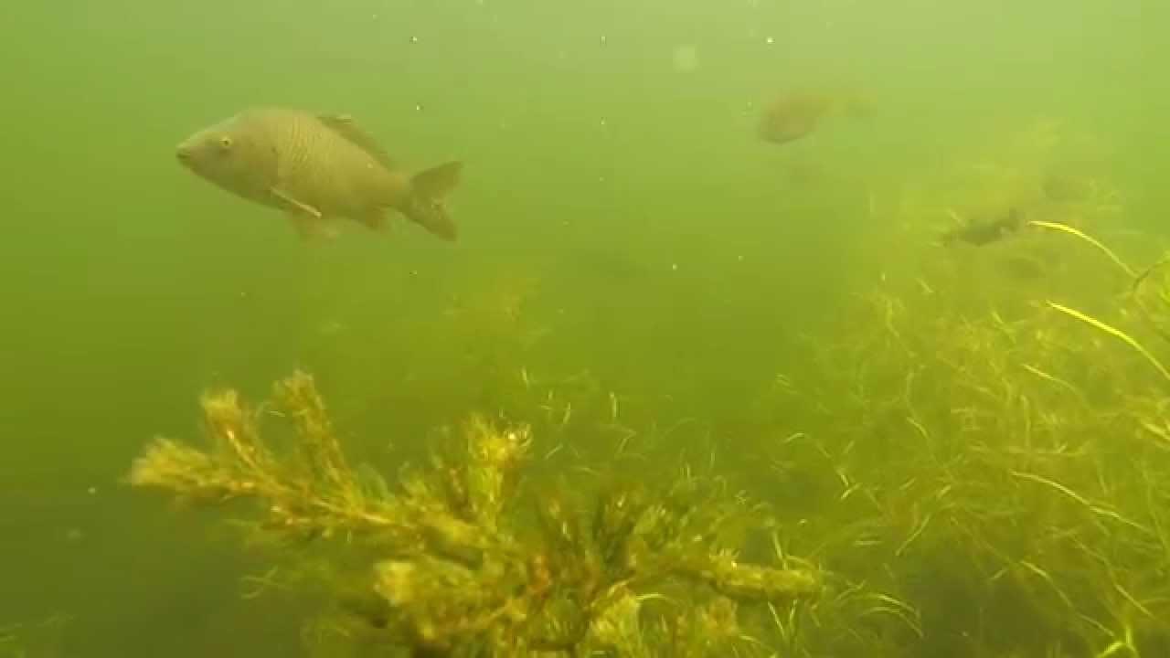 Lake minnetonka fish youtube for Lake minnetonka fishing report