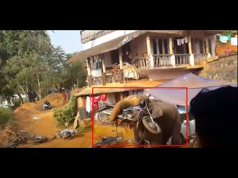 Elephant Attack In Valanchery Kerala-1 - YouTube