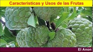 83 caracteristicas de las frutas el anon