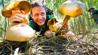 HeadSized GIANT MUSHROOMS!!   Pick + Cook 3 Ways  LOCAL FOOD DELICACY!!