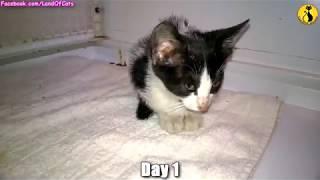 Котенок за 7 дней превращается в домашнего