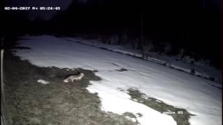 Видеонаблюдение на даче. DS-T101 (ночь)(, 2017-05-03T20:55:35.000Z)