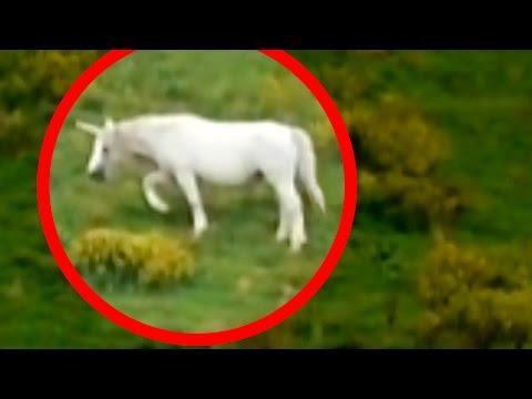 Unicorns Caught on Tape (BEST UNICORN SIGHTINGS)
