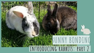 How to Bond Rabbits Together