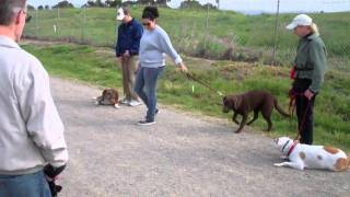 Dog Squad Dog Training Classes Saturday April 23, 2011