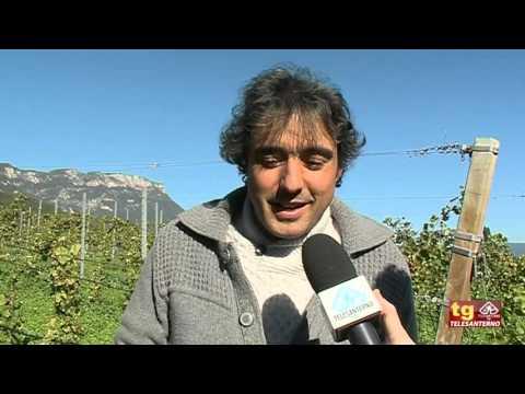 Bolzano: alla scoperta della cantina...