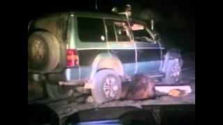Медведь напал на людей. Страшное видео!