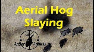 Helicopter Hog Hunting Slo Mo Kill Shots - Benelli M4 Shotgun - Buckshot