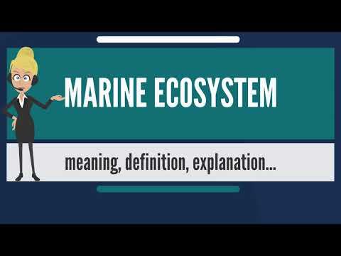 What is MARINE ECOSYSTEM? What does MARINE ECOSYSTEM mean? MARINE ECOSYSTEM meaning