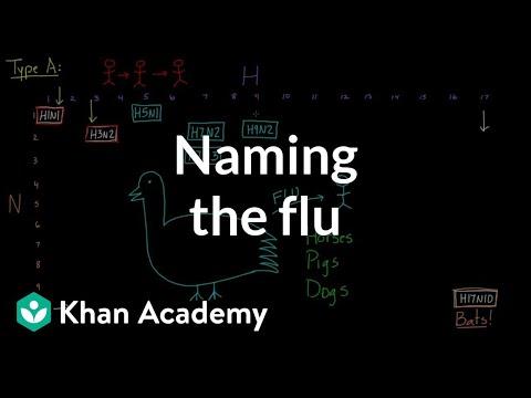 Naming the flu: H-something, N-something | Infectious diseases | Health & Medicine | Khan Academy