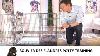 Bouvier des Flandres Potty Training from WorldFamous Dog Trainer Zak George  Bouvier des Flandres