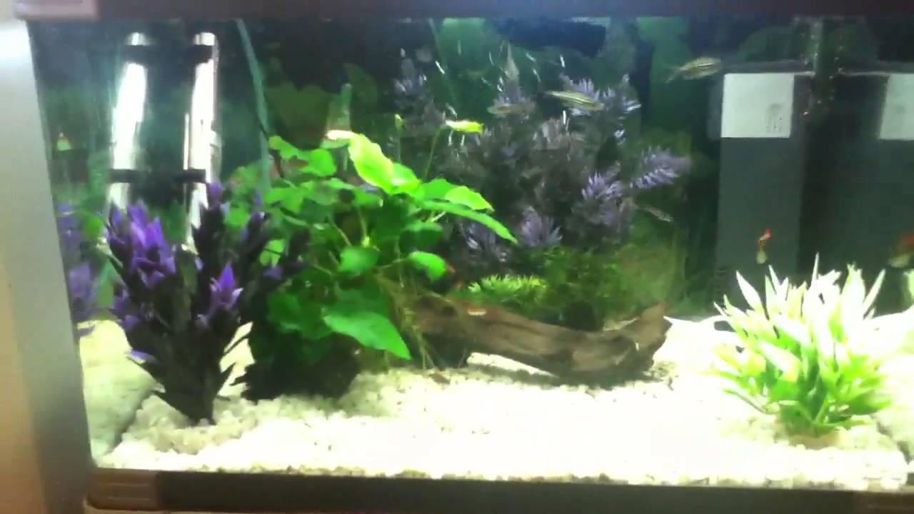 my 60 litre tropical fish tank youtube. Black Bedroom Furniture Sets. Home Design Ideas