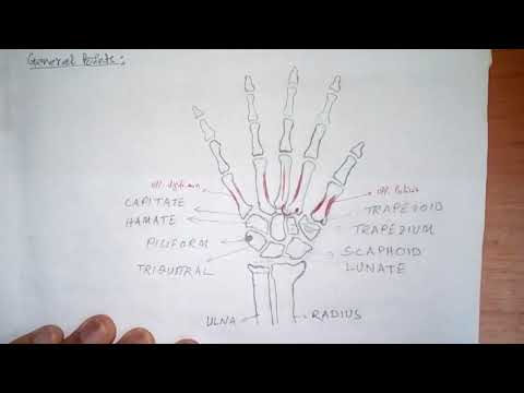 Anatomy of Metacarpal Bones (Simplified explaination) on your Reading Table)