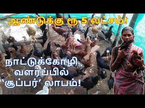 How to Start Country Chicken Farm Business - Plan, Ideas and Profits in Tamil