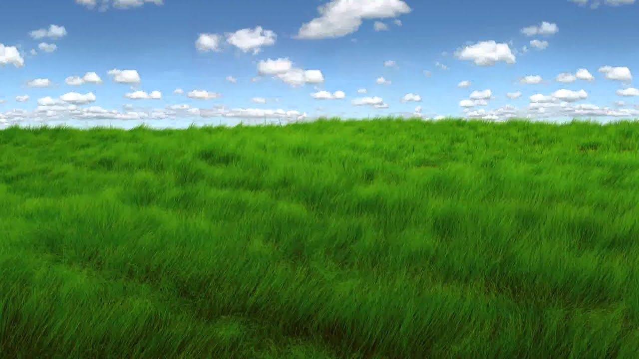 green grass field animated. Animated Grass Green Field