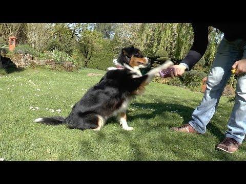 Trainingsroutine Touch und Fass - Für Hunde jeden Alters - Perfekt für Welpen und Junghunde
