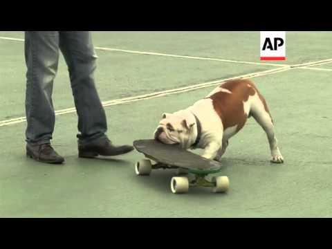 Bulldogs display their skateboarding abilities