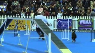 Sport News, Agility: Border Collie Itch In Dog Agility Contest, South Africa