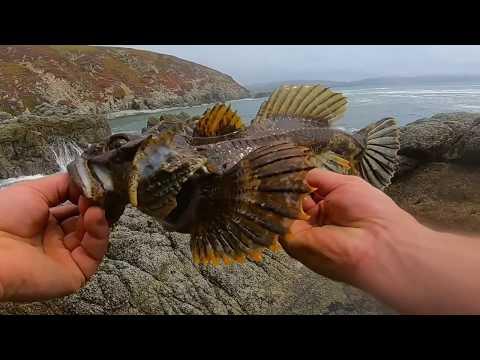 Fishing Near A MPA California Scorpionfish (aka Buffalo Sculpin)  Catch And Cook Rock Greenling