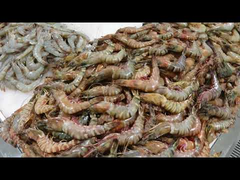 Dubai Waterfront Fish Market