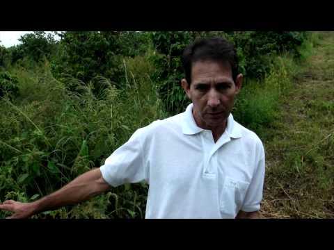 Brazil Environment.mp4