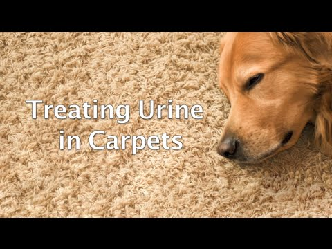 Get Pee Smell Out Of Rug Naturally