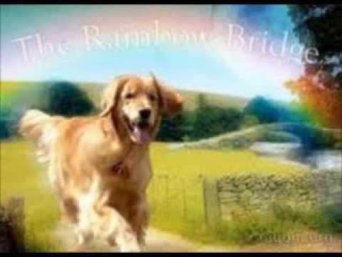 Rainbow Bridge Pet Heaven You