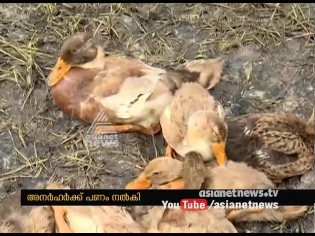Irregularities in providing compensation of Bird flu at Alappuzha