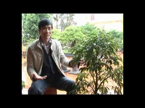 Vietbonsai.vn: Kỹ thuật trồng tạo hình cơ bản- P4