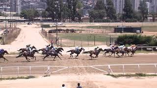 Vidéo de la course PMU PREMIO DOS DE PASTO Y UNA DE ARENA