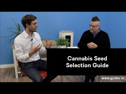 How To Pick Cannabis Seed For Top Quality Bud