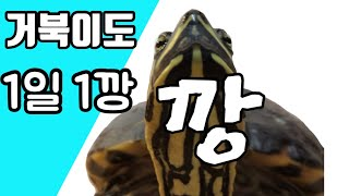 1일 1깡 거북이도 한다 [거북turtle - 깡 GA…