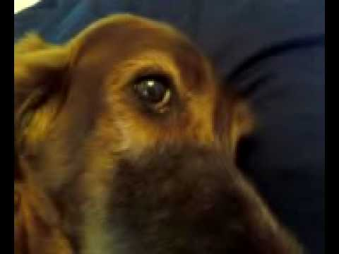 My Dog Won't Get Out of Bed - YouTube