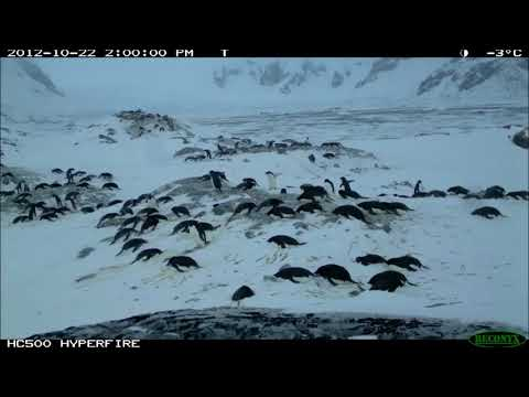 Quark Expeditions partners with Penguin Watch
