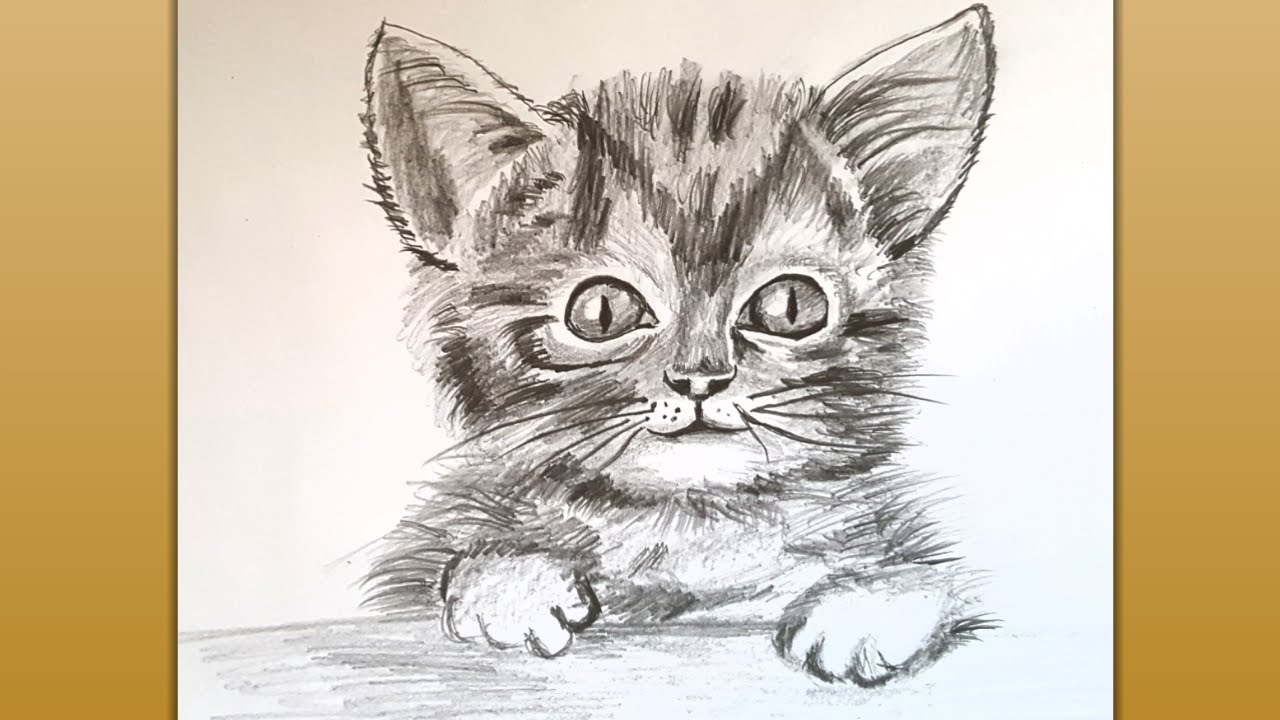 How to Draw a Cat Easy/ Step by Step Pencil Drawing ...