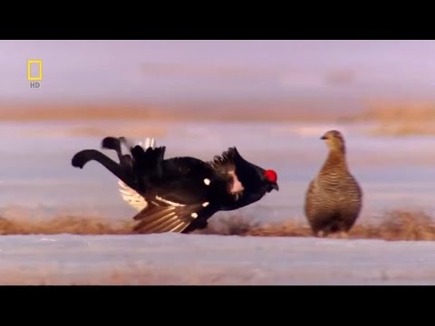 Wild Russia: Primeval Valleys - Nature Documentary Documentary HD