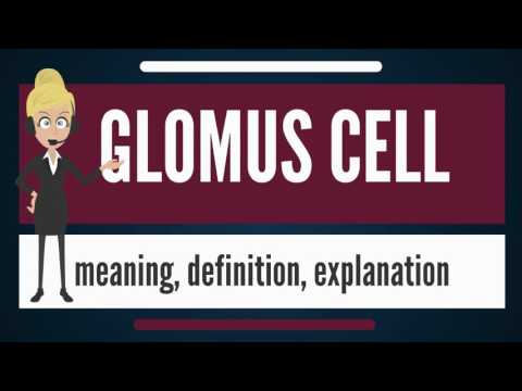 What is GLOMUS CELL? What does GLOMUS CELL mean? GLOMUS CELL meaning, definition & explanation