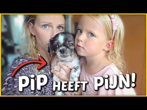 HET GAAT NiET GOED MET PiP! 😲   Bellinga Vlog #1451