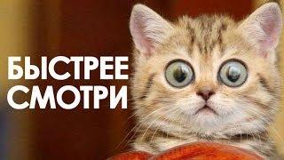 ПРИКОЛЫ С КОТАМИ подборка 2018  # JOKES WITH CATS # Funny cat Уматовые кошки! Летающий кот