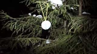 видео Новый год в лесу